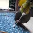 綿棒で遊ぶ